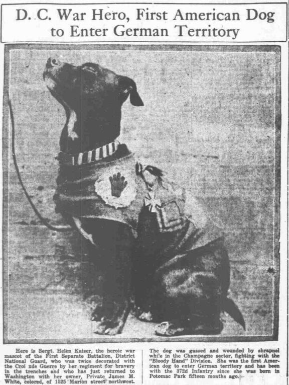 A World War I Hero: First American Dog to Enter German Territory
