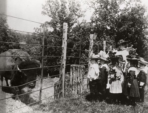 A group of school children viewing the first bison at the National Zoological Park in 1899. Photograph by Frances Benjamin Johnston (Smithsonian)