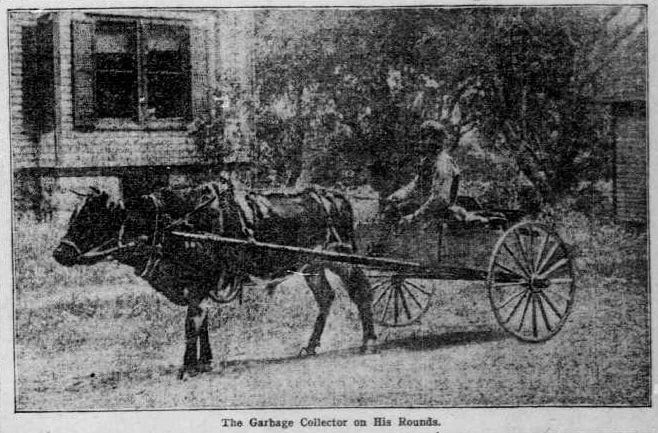 the Falls Church garbage collector making his rounds in 1903 (Washington Times)