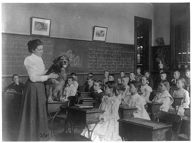Classroom scenes in Washington, D.C. public schools: studying live dog, 5th Division -1899 (Library of Congress)