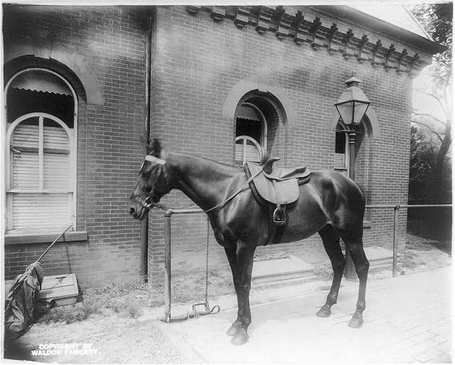 White House stables and horse during Teddy Roosevelt's administration (Library of Congress)