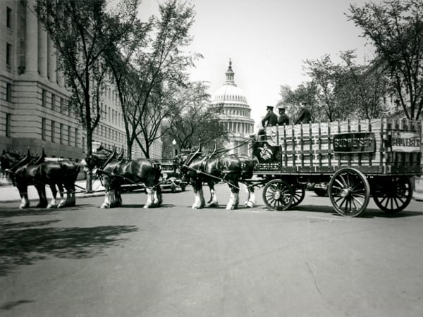 Budweiser Clydesdales in D.C. after the repeal (cnbc.com)