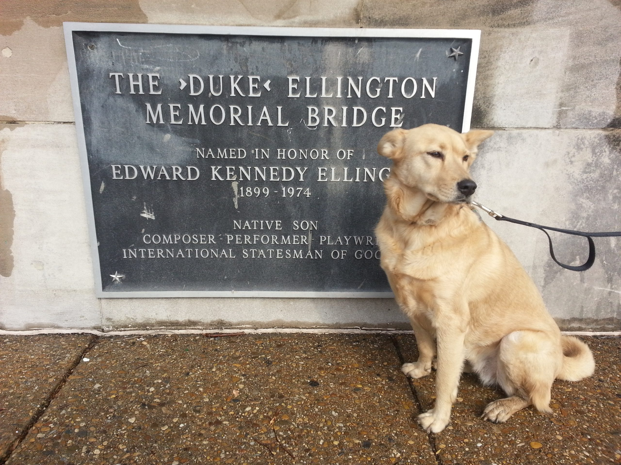 Ghost Dog Fetches Three Stories About the Duke Ellington Bridge