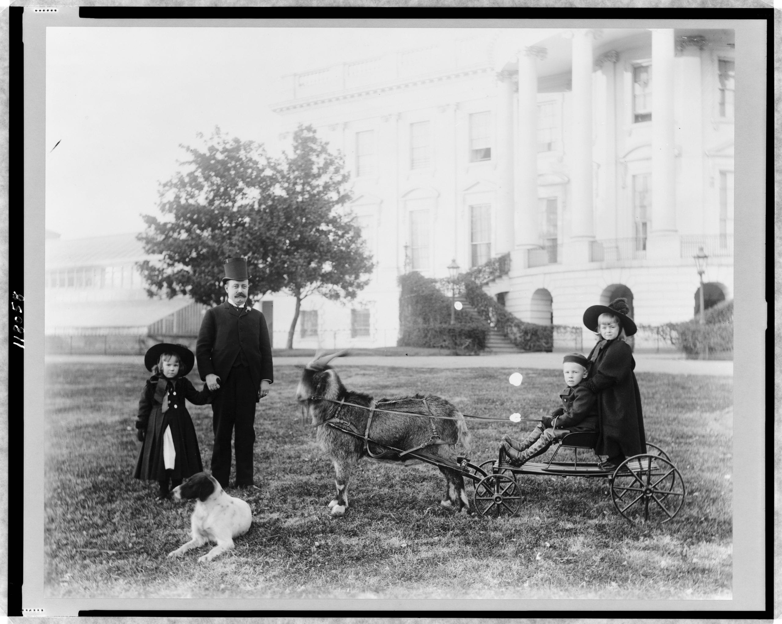 The Harrison Grandchildren on a Goat Cart at the White House