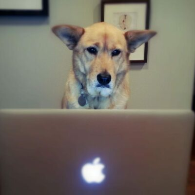 Ghost Dog is hard at work, surfing the web