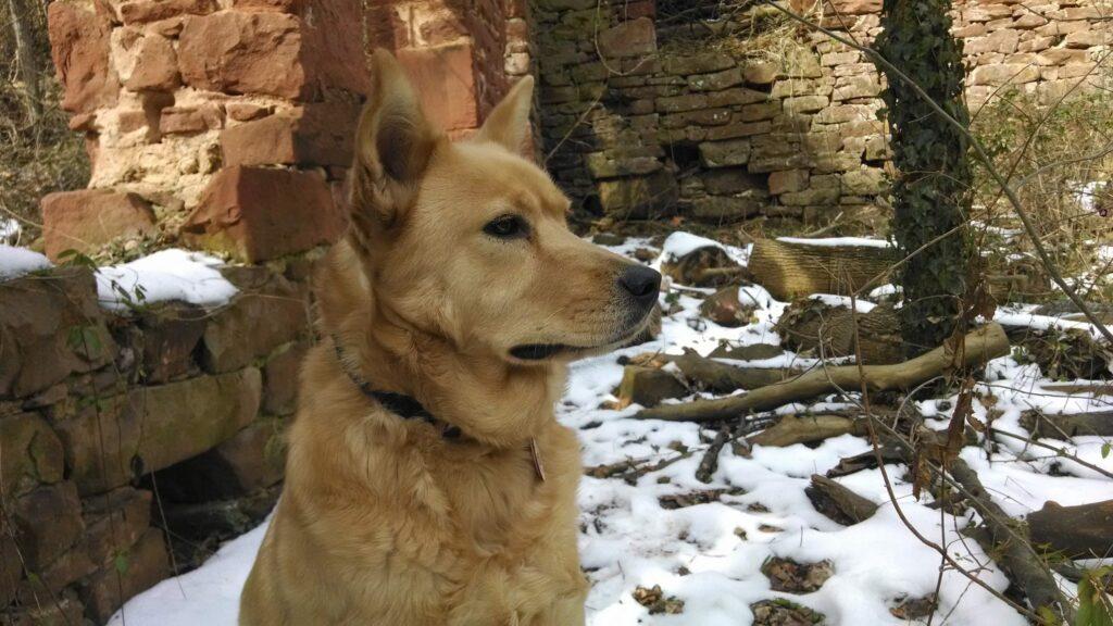 "Ghost Dog pondering the ""ghosts"" of Seneca Quarry"